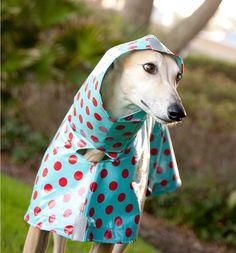 Dog Raincoat Slicker 2
