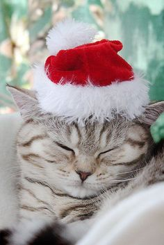 This cat is so snuggly in his Christmas hat and sitting by the fire, all ready for Winter
