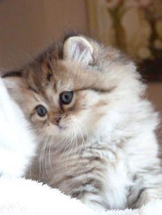 Hello Baby -
