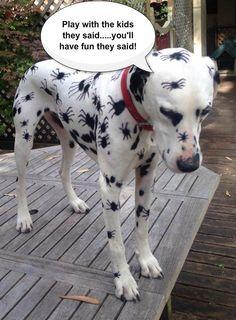 Dalmatian after kids.