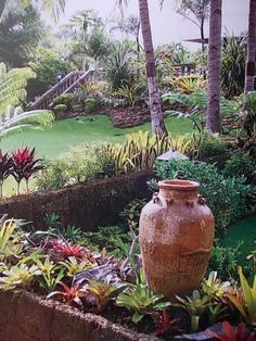 tropical garden love the pot idea - Florida Gardening Ideas