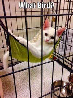 Cat in birdcage