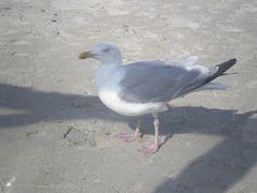 Bird at Terschelling