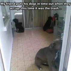 Funny dogs timeout