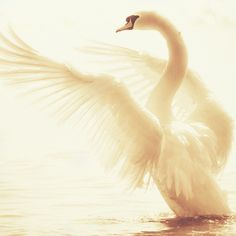 <3 ... opened wings just like his opened hands                                                                                                                                                      More