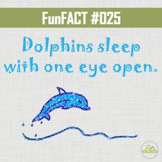 Dolphins sleep with one eye open. #DYK #funfacts