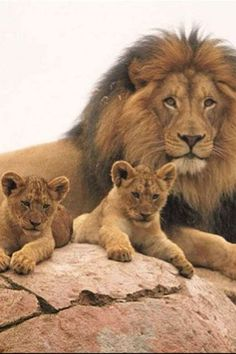 Jericho, Cecil the Lion's brother, is the best uncle ever.