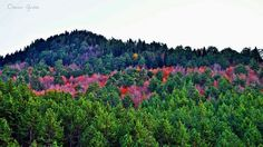 Kahramanmaraş'tan sonbahar manzaraları.