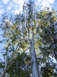 Uprooting the Eucalyptus - Wells of Wealth Nairobi, Romantic Travel, Australia Travel, Vacation, Plants, Wells, Vacations, Australia Destinations, Holidays Music