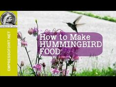 How to Make Hummingbird Food | eBay