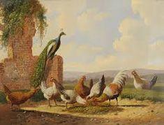 Image result for Albertus Verhoesen