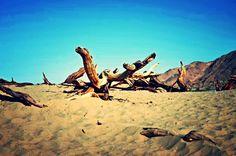 Somewhere on the desert...