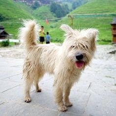 Mix, Longsheng Rice Terrace, Guangxi, China • (name unknown)