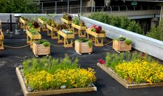 roof top gardening. who doesn't want to?