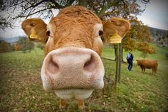 Cattle Farmers Expect Rising Beef Prices | News - Indiana Public Media