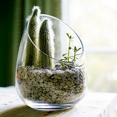 Bringing the outdoors in with a cactus terrarium