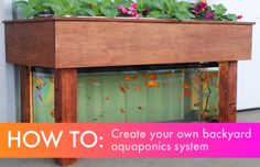 DIY: Everything you need to know to build a simple backyard aquaponics system:  http://inhabitat.com/diy-everything-you-need-to-know-to-build-a-simple-backyard-aquaponics-system/