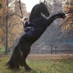 Caption this photo! Photo by (Note: This is a real photo of a real girl riding a horse the d. Wildlife Nature, Nature Animals, Animals And Pets, Cute Animals, Animals Photos, Most Beautiful Horses, Pretty Horses, Horse Love, Horse Girl Photography