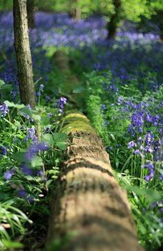 Country Living ~ walks in the woods ~ bluebells Bouquet Champetre, Enchanted Wood, Tree Forest, Magical Forest, Walk In The Woods, Natural World, The Great Outdoors, Wild Flowers, Purple Wildflowers