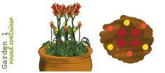 container garden, canna lilies and callas