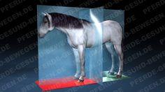 Der Schwerpunkt des Pferdes  http://shop.pferde-gesund-bewegen.de/produkt/pferdeanatomie-teil-1-das-skelett-des-pferdes-onlinekurs-preview-version/