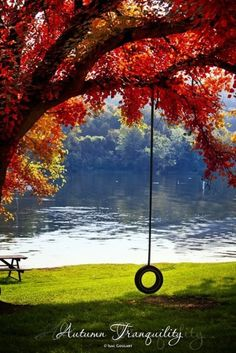 """Tire swing! My grandpa used to say when he was tired of swinging us on the tire swing """"time to let the cat die down"""" @Lacy Berry"""