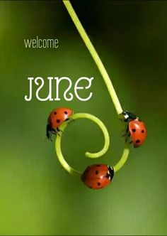 Good bye May.. Hello June.