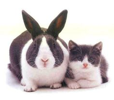 Rabbit and Cat. They were identical twins but one was hungrier.