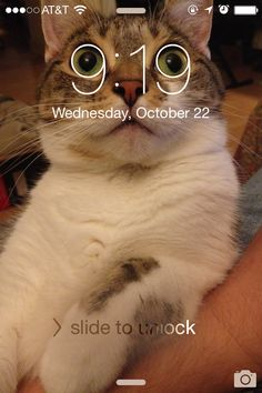 Cat Memes Of The Day 30 Pics – - Love.,Funny, Funny Categories Fuunyy Cat Memes Of The Day 30 Pics – - Lovely Animals World Source by lovelyanimalsworld. Funny Animal Jokes, Really Funny Memes, Cute Funny Animals, Stupid Funny Memes, Funny Animal Pictures, Cute Baby Animals, Haha Funny, Funny Cute, Cute Cats