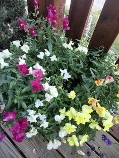 blomster på altan