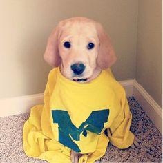 "Cuteness overload. > From Michigan's ""Michigan Pets"" board."