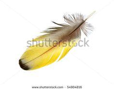 Macaw feathers Stock