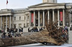 Stuart Franklin UK. London. 2009. An installation in Trafalgar Square called Ghost Forest by Angela Palmer. 10 tree stumps shipped in from Ghana are on display. Ghana has lost 90% of its primary forest over the past 50 years. The installation is a protest against deforestation and climate change. 2009.