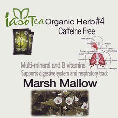 Organic Herb #4 - Caffeine Free