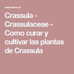 Crassula - Crassulaceae - Como curar y cultivar las plantas de Crassula