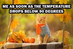Funny Animal Memes, Funny Animal Pictures, Funny Animals, Funny Quotes, Cute Animals, Funny Memes, Smart Quotes, Funny Comedy, Animal Humor