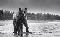 Archive of Manliness | rhubarbes: David Yarrow Photography