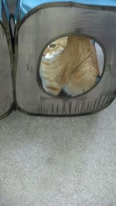 Peek a boo Tryood
