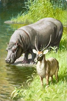 Hippopotamus and Waterbuck - African Mammals..