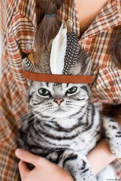 PetsLady's Pick: Cute Indian Cat Of The Day...see more at PetsLady.com -The FUN site for Animal Lovers