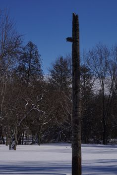 Totem pole in the middle of winter Planets, Middle, Gallery, Winter, Happy, Photography, Winter Time, Photograph, Roof Rack