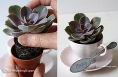 bomboniere piante grasse fai da te - Cerca con Google
