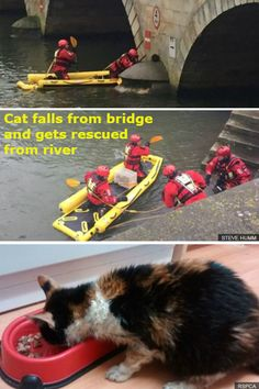The animal scrambled on to a bridge support after plunging in to the River Great Ouse in Bedford. Inflatable Raft, Bridge Support, Fishing Boats, Rafting, Animal Rescue, Centre, Safety, Cookie, Fire
