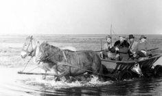 Wiosną strącał kaczory na sięgających horyzontu rozlewiskach Warty, jesienią przemierzał kartofliska, z których podrywały się stadka kuropatw. Świetny strzelec, znakomity kompan, a przede wszystkim – sprawny organizator. Edward Gwóźdź – spadkobierca wspaniałych łowieckich tradycji – to jedna z ważniejszych postaci w powojennej historii łódzkiego okręgu PZŁ.