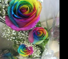 those are the most beautiful flowers i've ever see....<3
