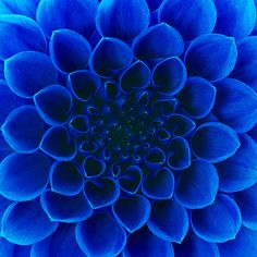 You Are a Blue Flower    A blue flower tends to represent peace, openness, and balance.  At times, you are very delicate like a cornflower.  And at other times, you are wise like an iris.  And more than you wish, you're a little cold, like a blue hydrangea.