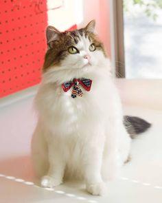 ちょこタイ猫首輪Yes We Can?Cat! 猫専門店ゴロにゃん★公式通販サイト|猫の首輪・猫用品・フード|