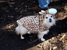 Don't you just love a dog in an outfit?