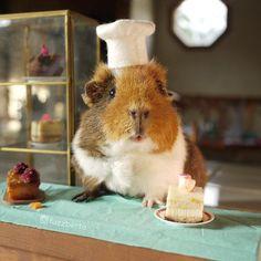 O hai may I help you?  Follow @carislittlepiggies! They're blobbysitting Fuzzberta and MGP right now