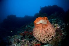 barrel sponge  (great inspiration for ceramics!)